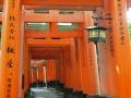Fushi-mi-Inari Taisha, torii rossi.