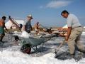 5 La raccolta del sale con pala e carriola