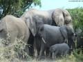 Elephant-game-drive