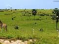 Giraffe-presso-Samburu-National-Reserve