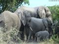 Elephant game drive