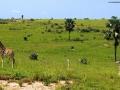Giraffe presso Samburu National Reserve