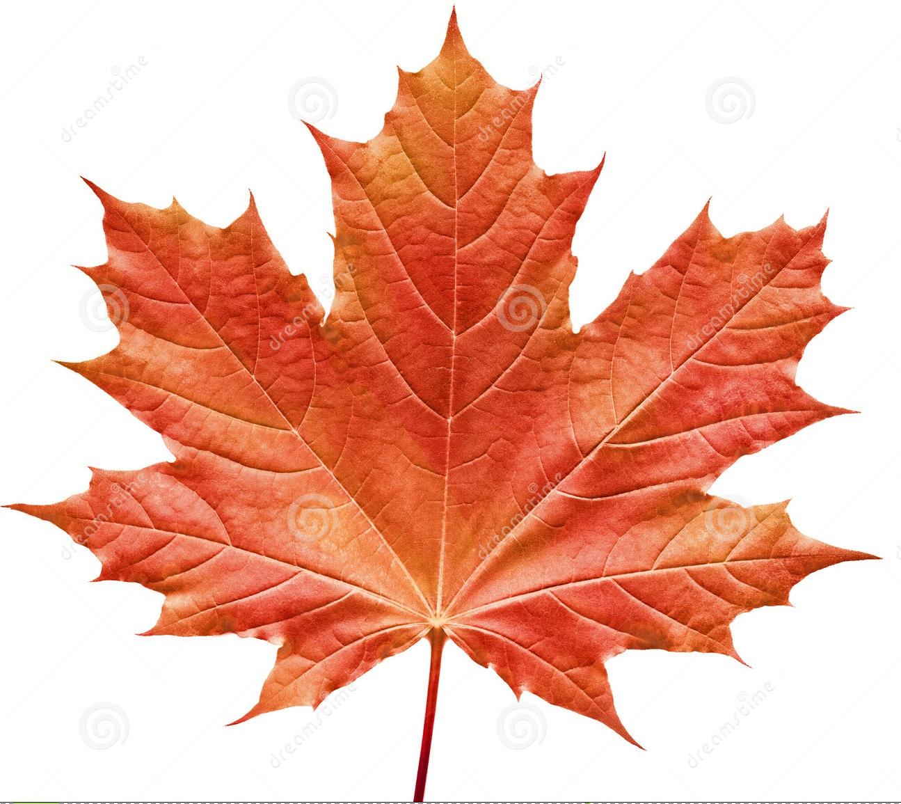 Il canto dei meticci canadesi etnie for Foglia acero
