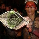 I Sateré Mawé e il rito della tucandeira