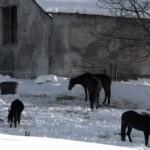 La neve che scompare: fenomeno meteorologico o culturale?