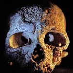 Per la prima volta, scoperte incisioni geometriche su conchiglia più antiche della comparsa di <em>Homo sapiens</em>