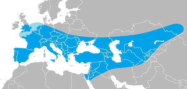 bruniquel neadertaliani - estensione-neandertal
