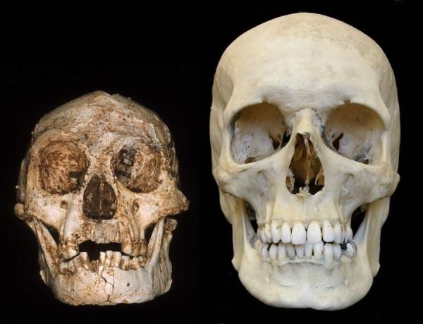 bruniquel neandertaliani - hobbit-skull