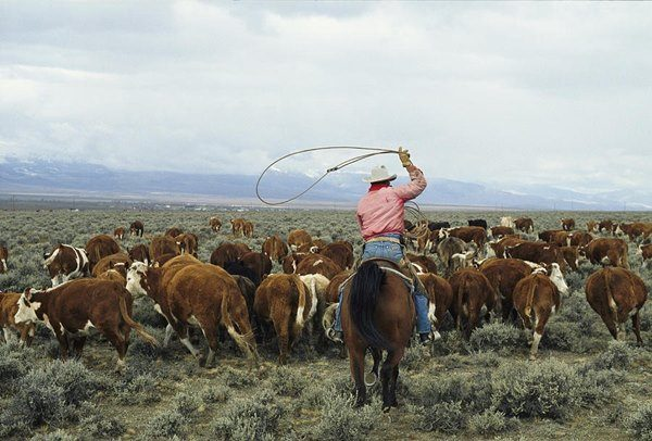 texas etnico prima puntata -cowboy