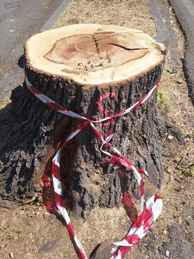 veneti odiano alberi