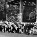Tra Piemonte e Provenza, la verità storica
