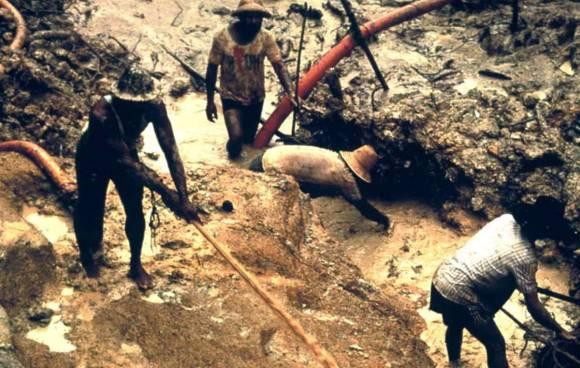 yanomami minatori